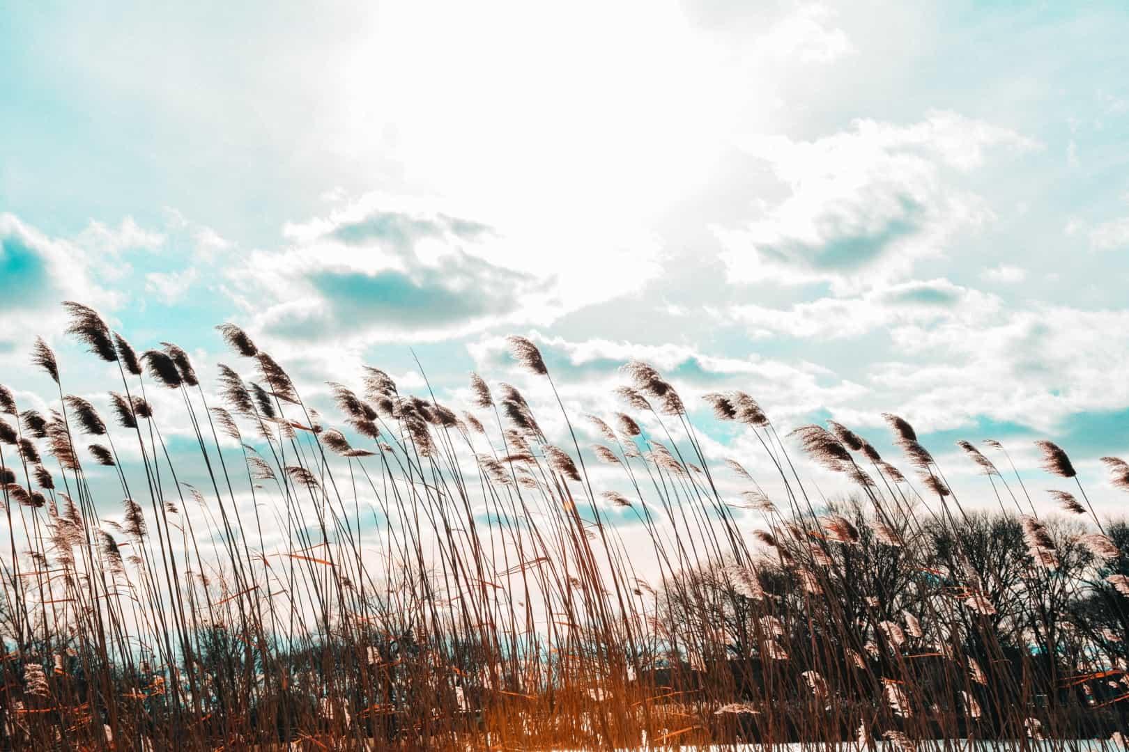 Guidet meditation - Den lysende kugle